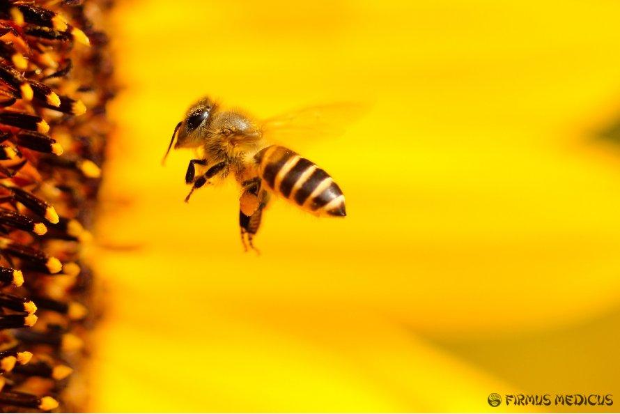 5G gali kenkti bitėms, paukščiams ir medžiams