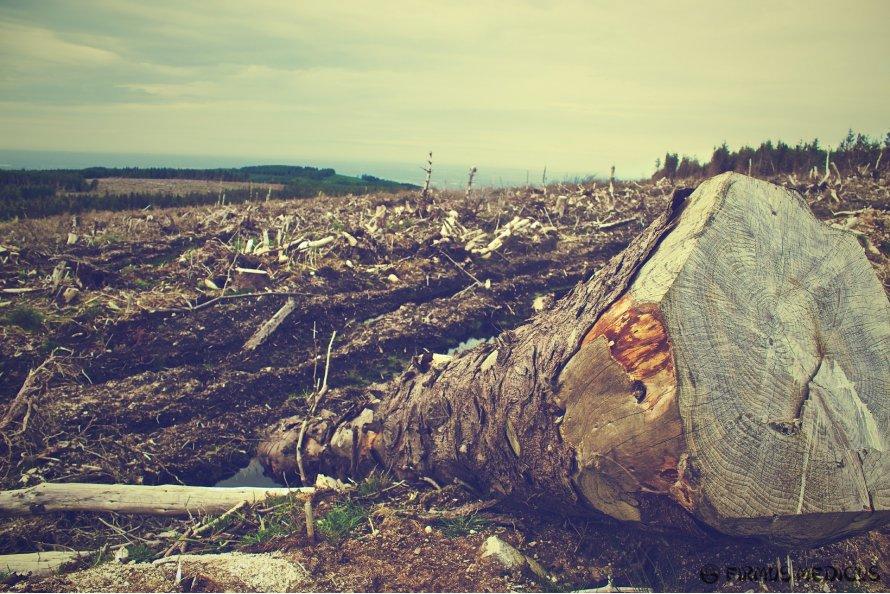 Montuojant 5G įrangą kenčia medžiai