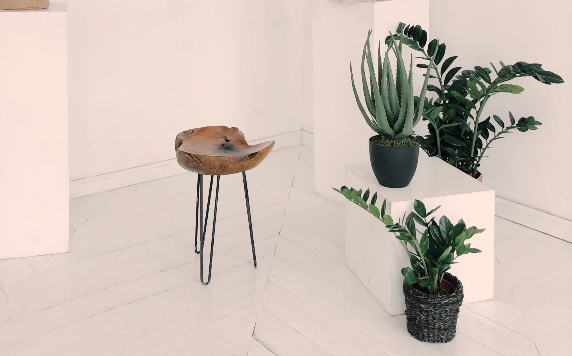 Kambariniai augalai – puošmena, kuri kartais žalinga sveikatai
